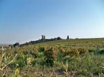 Chateauneuf des Papes -Chateau et Vignes